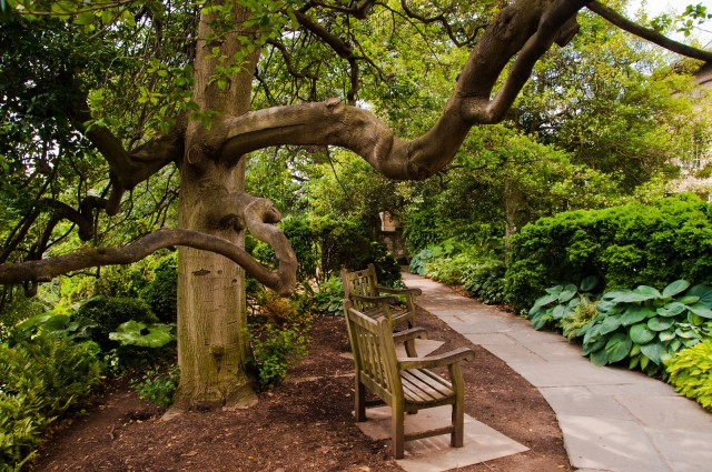 Path in the Bishops Garden, at the Washington National Cathedral