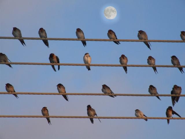 Swallow Moon Carnarvon 07 - Robin Alasdair Frederick