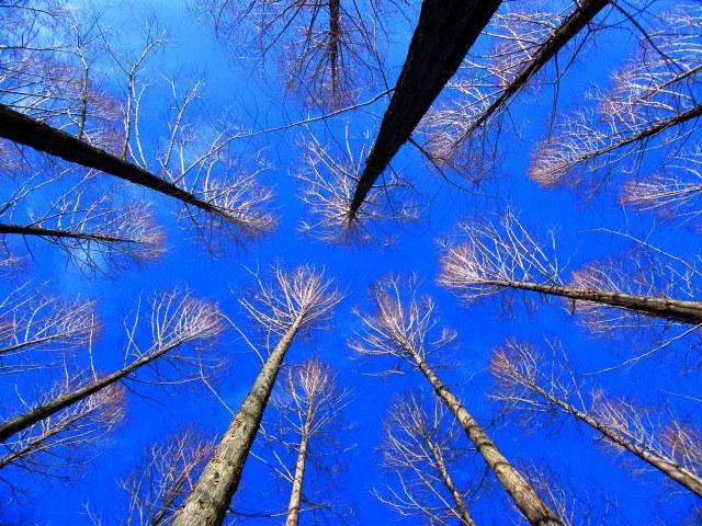 tree-silhouette-in-blue-sky-stanley-zimny